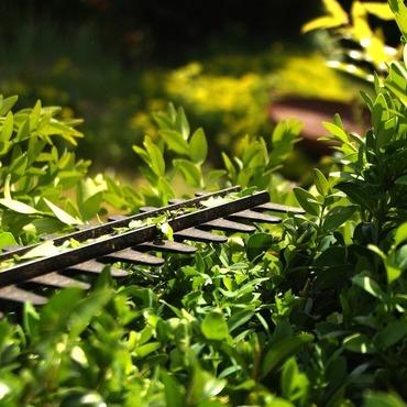 Espoir végétal  - Lassy - Taille de végétaux