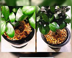 Décoration de plantes intérieures